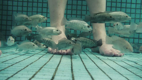 Underwater Fish Spa Pedicure Closeup Footage