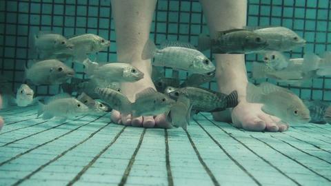 Underwater Fish Spa Pedicure Closeup stock footage