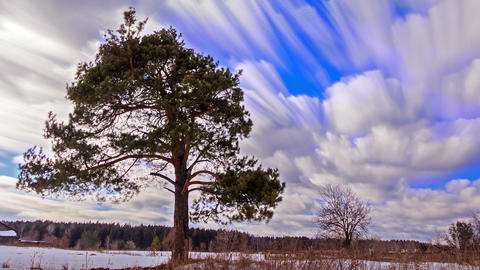 Pine against the sky. Blurry. Time Lapse. 1280x720 Live Action