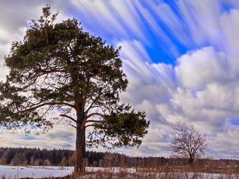 Pine against the sky. Blurry. Time Lapse. 640x480 Footage