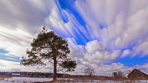 Single tree against the sky. Blurry. Time Lapse Footage