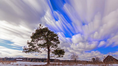 Separately growing pine against the sky. Blurry. Time Lapse. 1280x720 Footage