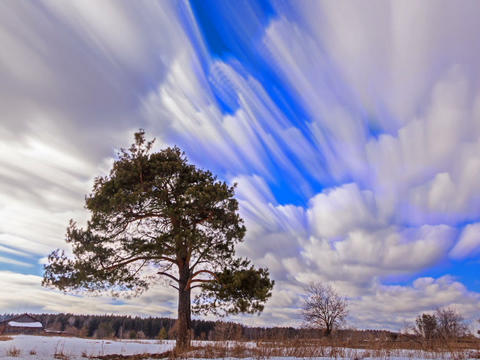 Separately growing pine against the sky. Blurry. Time Lapse. 640x480 Footage