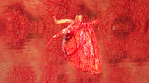 Human Heart Cardio Vascular System Flow Motion Stock Video Footage