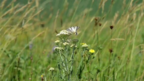 Herbs 17a Stock Video Footage
