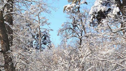Winter landscapes 6b Footage