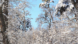 Winter landscapes 6b Stock Video Footage