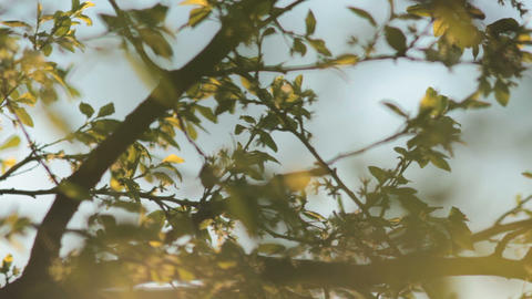 Sun shining through tree leaves and branches at sunset Stock Video Footage