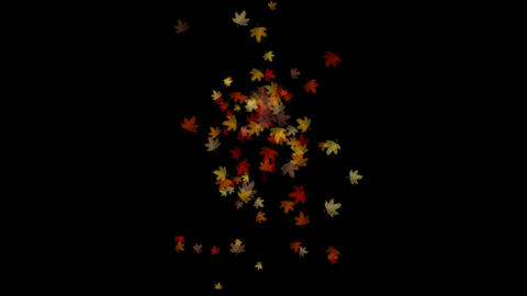 Maple leafs falling and flare light,Alpha Channel,symbol,dream,vision,idea,art,r Footage