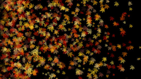 group of golden maple leafs flying,seamless loop.Autumn... Stock Video Footage