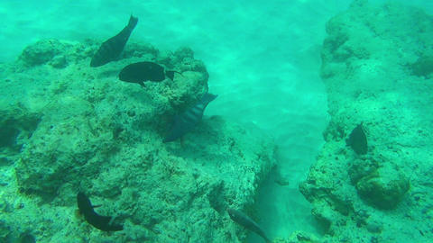 Tropical fishes Stock Video Footage