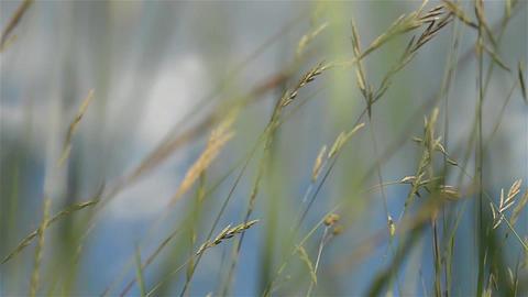 Herbs 16d Footage