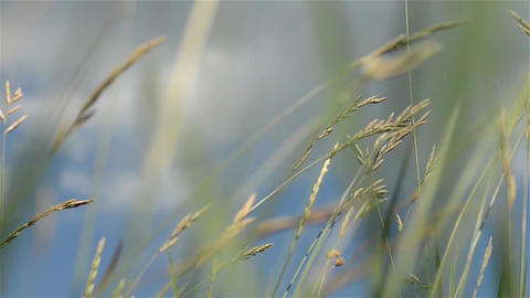 Herbs 16d Stock Video Footage