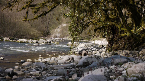 Mountain River among Trees and Stones in Gorge 4 Stock Video Footage