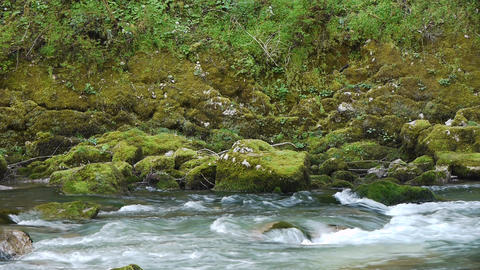 Mountain River among Trees and Stones in Gorge 12 Stock Video Footage