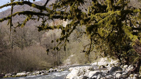 Mountain River among Trees and Stones in Gorge 9 Footage