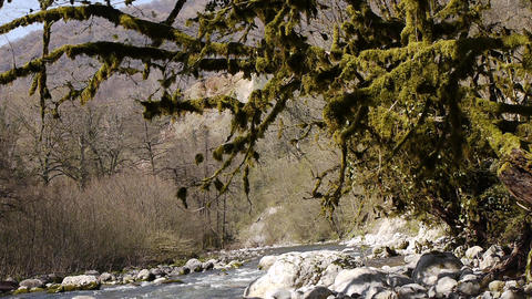 Mountain River among Trees and Stones in Gorge 9 Stock Video Footage