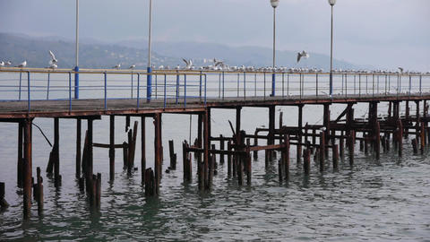 Sea Gulls on Old Wood Pier 3 Footage