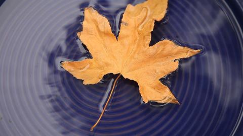 autumn leaves on water Footage