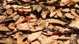 Leaves on the Ground Footage