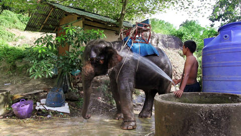 elephant and driver Stock Video Footage