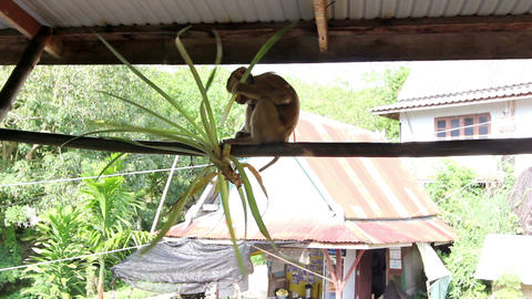 Funny monkey Stock Video Footage