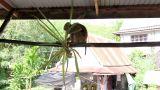 Funny monkey Footage