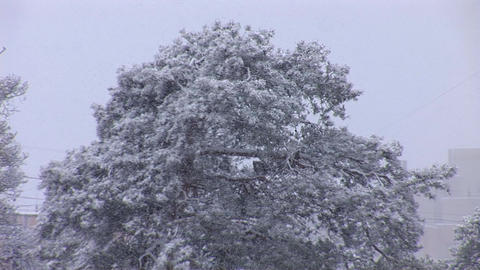 snow 2 Footage
