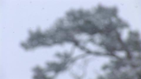 snow 4 Footage