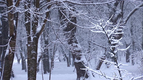 snow 6 Footage