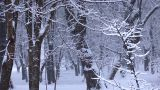 Snow 6 stock footage