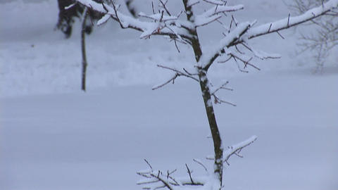snow 8 Stock Video Footage
