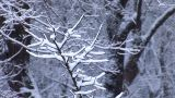 snow 8 Footage