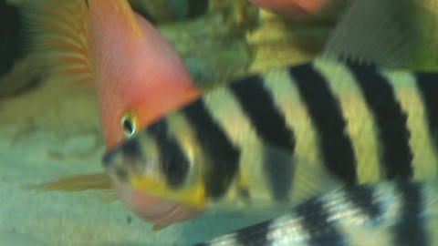 fish 1 Stock Video Footage