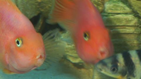 fish 1 Footage