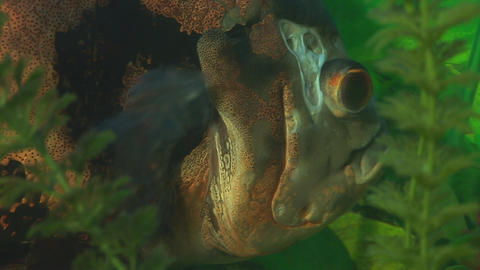fish 3 Stock Video Footage
