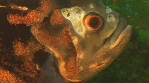 fish 9 Footage