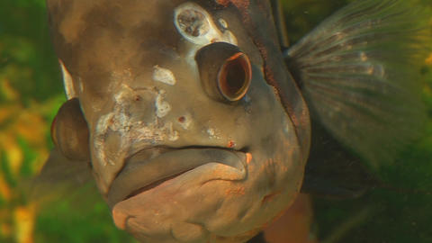 fish 9 Stock Video Footage