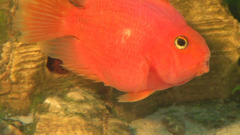 fish 11 Stock Video Footage