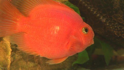 fish 11 Footage