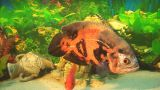 Fish 13 stock footage