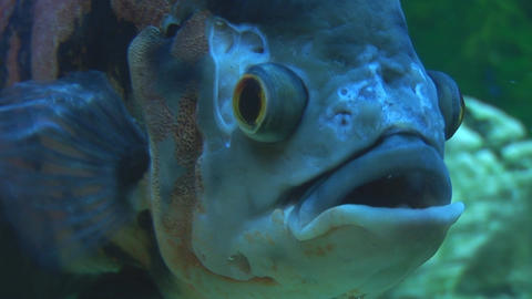 fish 19 Stock Video Footage