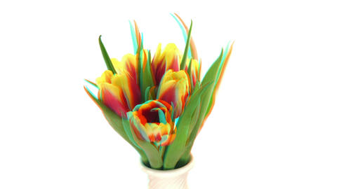 Stereoscopic 3D time-lapse of opening yellow-red tulip 1... Stock Video Footage