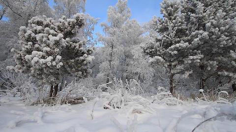 Winter scene 4 Stock Video Footage