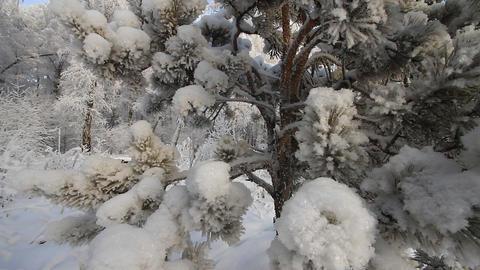 Winter scene 6 Stock Video Footage