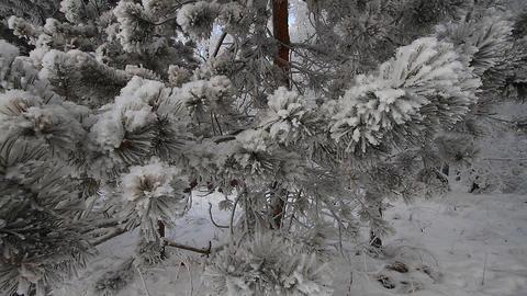 Winter scene 8 Stock Video Footage