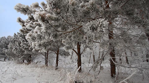 Winter scene 10 Stock Video Footage