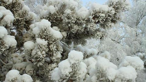 Winter scene 12 Stock Video Footage