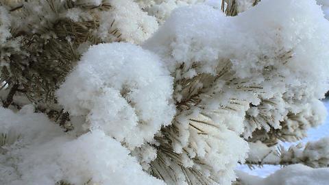 Winter scene 16 Stock Video Footage