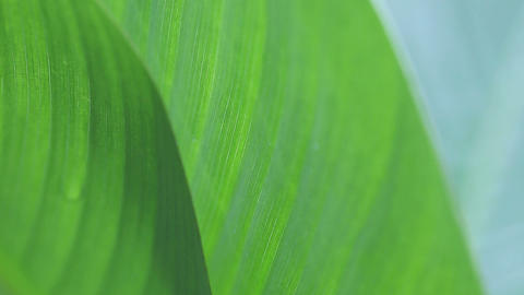 two tropical leaves closeup Footage